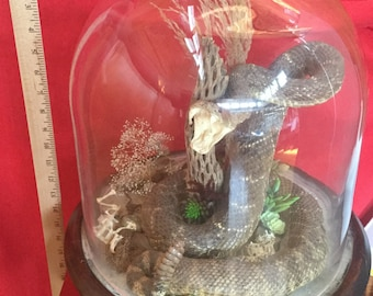 Z-22 Taxidermy Large Rattlesnake Glass Dome display snake western scorpion bones