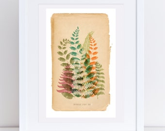 Heligan Botanical Study Print