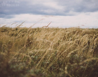 RUSTLING photography print, calm golden beach grasses in the wind, 8x12