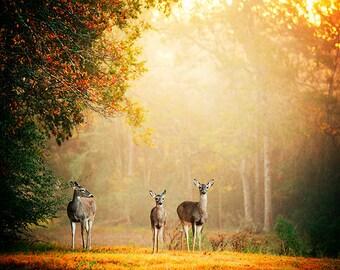 Fall Photography, Deer Decor, Animal Photography, Wildlife Photo, Fog, Mist, Autumn, Autumnal, Texas, Nature, Landscape, Dreamy Decor, gold