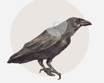 print, watercolor - Raven - crow tea