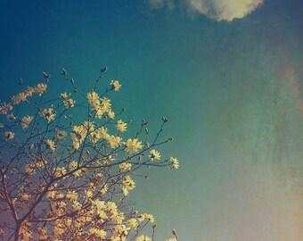 Dreamy Photography - Ohio Art - Flower Photography - Spring Decor - Nature Print - Blue - Faded Photograph - Floral - Bohemian Art Print