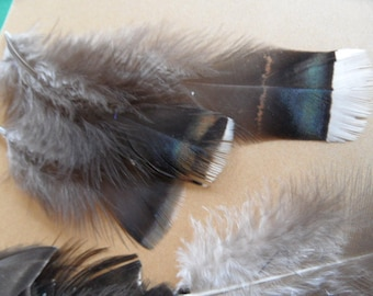 feathers orzak, 3 rare, long, black/taupe and white line in iridescent
