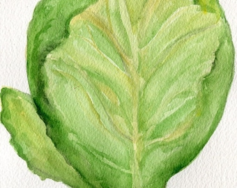 Cabbage watercolor painting, 5 x 7 Original,  kitchen decor, food art, green cabbage, culinary watercolor, vegetable wall art, Modern