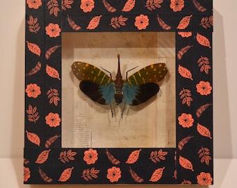 Entomological deco framework