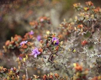 SPRING FLOWERS photography print, flower wall art, 8x12
