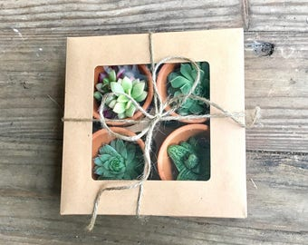 Succulent Gift Box - All Brown Terra Cotta