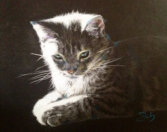 Pet Portrait. Colored pencil on toned paper. 8 x 10 inches.