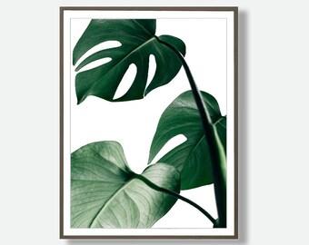 Monstera Wall Art, Digital Download Leaf, Monstera Photo, Printable Poster, Monstera Digital Download, Printable Tropical Art, Feliss-Art