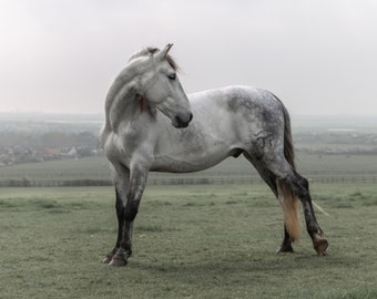 """Andalusian standing in the mist on a hill print 12"""" x 8"""""""
