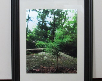 Ready for Anything Nature Photography Print