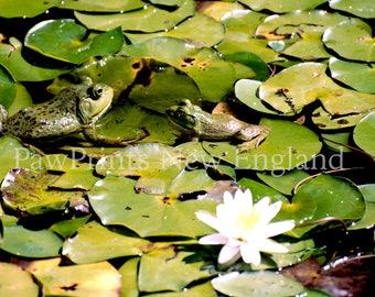 Froggy Pair