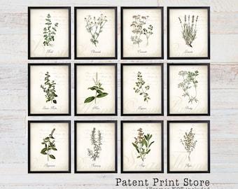 Herb Botanical Art Prints. Herb Prints. Herb Wall Art. Botanical Print. Kitchen Art Prints. Dining. Botanical Wall Art. Farmhouse Decor. 105