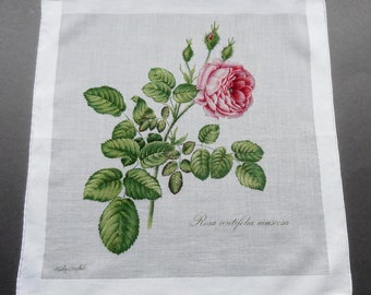Rosa Centifolia Muscosa - Vintage Fisba Stoffels Floral Cotton Hankie Handkerchief