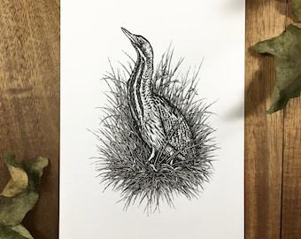 Bittern   Original Drawing