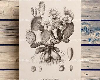 Botanical print, Cactus art print, Printable botanical art, Cactus print, Botanical art, Cactus poster, Cactus wall art, JPG PNG 300dpi