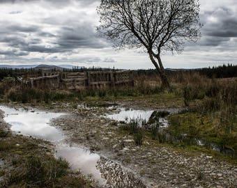 Fine Art Photograph - Irish Tree - Pick your print size - Unique Decoration - Rural Ireland - Donegal Landscape
