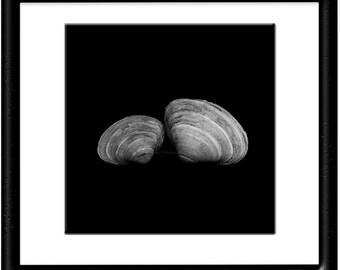 Coastal Art-Shell Photograph-B&W Shell Photography-Square Wall Art-Square Photo-Shell Wall Decor-Fine Art Photograph-Black White Print