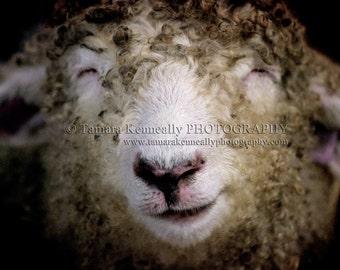 Smiling Sheep - 5x7 inch print in 8x10 matt board