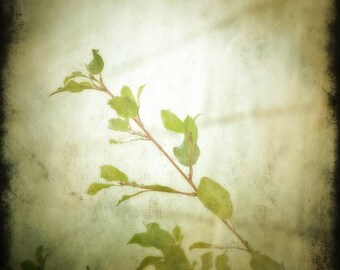 Spring Leaves Photograph, home decor Fine Art Photograph new growth green
