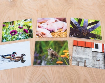 Flora & Fauna Color Photo Note Cards, Set of 6 Blank A2 Cards Featuring Flowers, Birds, Piglets and Iron Garden Art
