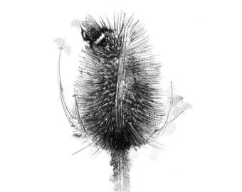 Bumble bee | Limited edition fine art print from original drawing. Free shipping.