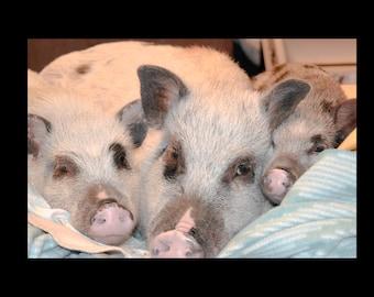 "The Three Little Pigs - 8""x10"" Photo Print"