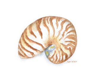 Nautilus Watercolor Painting - 14 x 11 - Seashell Art Summer Beach Print - Giclee Reproduction