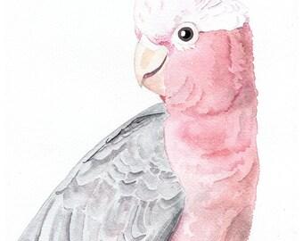Galah art print, pink wall art,gift under 50, Australian bird art, pink parrot print, gift teen girl, nursery art, art above crib, kids room