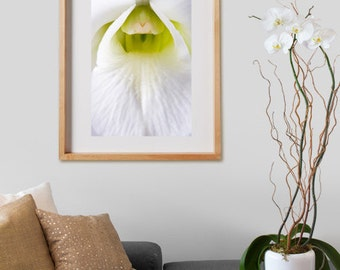White Orchid Print.  Tropical  photography, flower, botanical, decor, wall art, artwork, large format photo.