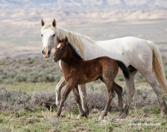 Mare and Foal in Step - Fine Art Wild Horse Photograph - Wild Horse - Adobe Town - Fine Art Print