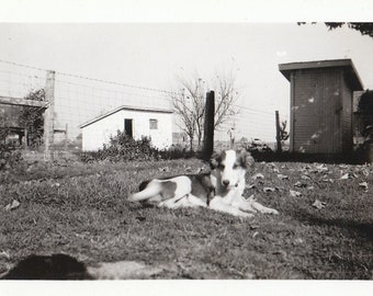Original Vintage Photograph Snapshot Sweet Dog Resting Ourdoors 1930s-40s