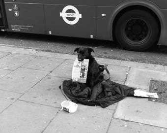 Dog Print, Dog Wall Art, Dog Art, Dog Wall Decor, Dog Art Print, Animal Print, Dog Photography, Dog Photo, Big Issue, London Street Print