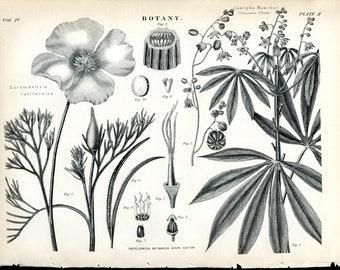 16 Original Prints - Botany and Flowers - 1870's