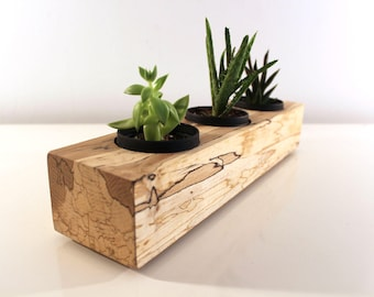 "14"" Spalted Maple Succulent Planter, Exotic Wood Herb Garden, A Unique Eco-Chic House Warming Gift"