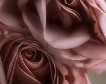 Fine art photography Flower photography Rose print Home Décor Bedroom rose print rose photo Pink rose print floral wall art rose art