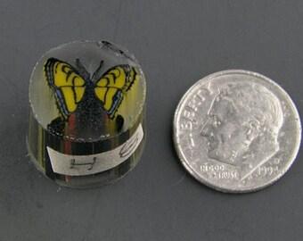 Swallowtail Boro Cane 8 grams - 117 H