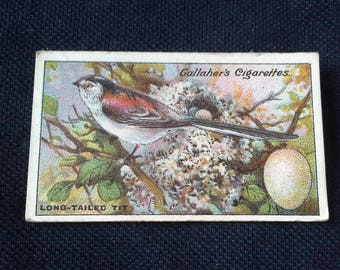 Gallaher Cigarettes Picture Card Birds Nests And Eggs Series No69 Long Tailed Tit