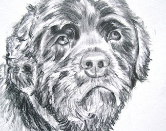 Dog Sketch Custom Dog Portrait, 8 x 10