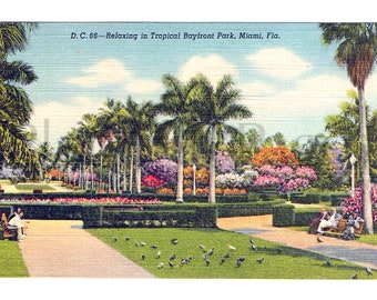 1945 Bayfront Park, Miami, Florida Vintage Postcard, Collectible Postcard, Florida Postcard, Vintage Postcard, Souvenir, Great for Framing.