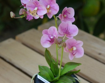 Handmade Clay Orchids