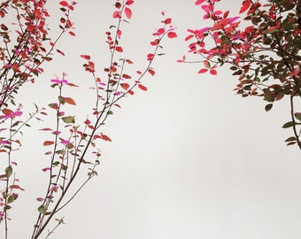 Pink Leaves -- Still Life Photography