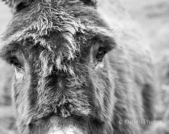 Cute Donkey Close Up Black And White Photo Or Canvas Print Multiple Sizes