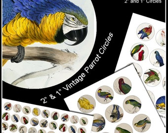 """Parrot Collage Sheets - 2"""" and 1"""" Digital Printable Tropical Bird Images for Cupcake Toppers Jewelry and other Crafts"""
