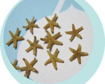 """10 Tiny Starfish  - Tampa Bay Sea Stars Approx  1/2"""" - 1 inch - Ask for Int'l ship rates"""