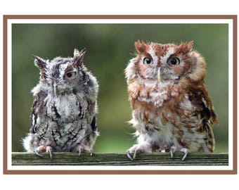 Screech Owls Card Pack of 6