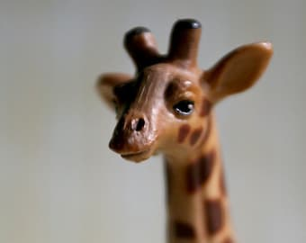 Yes.... - Giraffe - Photograph - Various Sizes