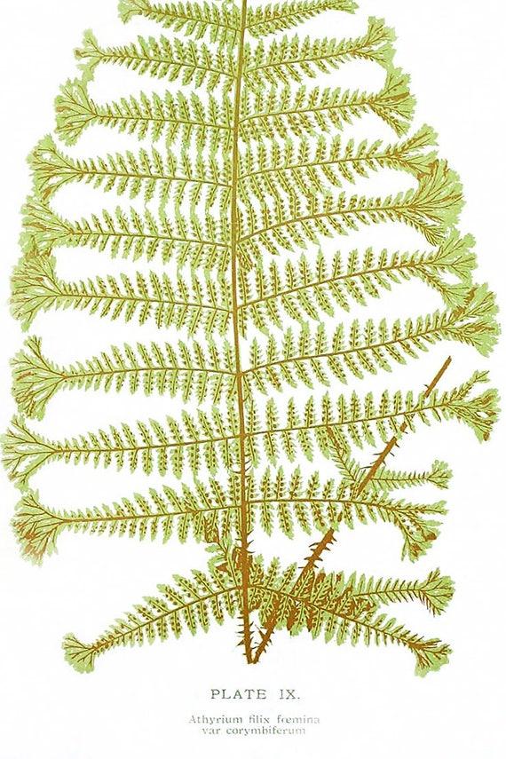 Botanical Illustration Botanical Print Set Fern Print 3