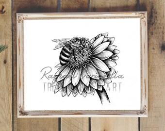 Honey Bee Flower Art- Giclee Fine Art Print - Pen and Ink Illustration - Honey Bee Illustration