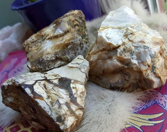Natural Petrified wood grounding stone/Root Chakras /Metaphysical Healing Crystal/Crystal Collection/ Pacific Northwest/emotional healing